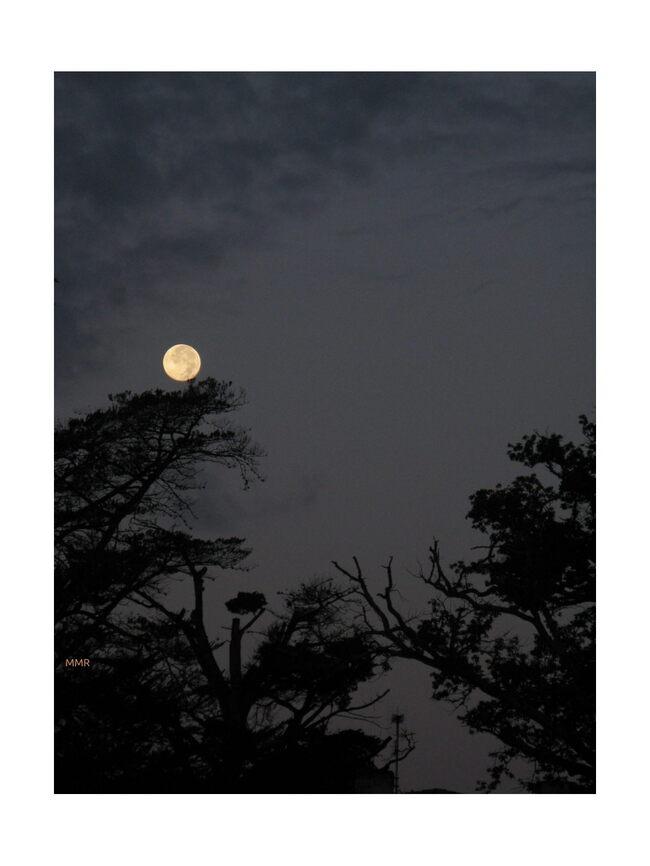 partage de novembre : photos de nuit  et/ou  premières photos d'hiver