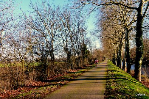 Un chemin et des arbres