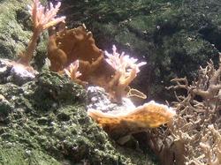 aquarium de paris 水族館