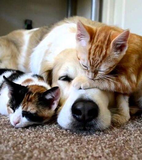 Ces 17 adorables félins vont vous donner envie d'adopter un chat roux!
