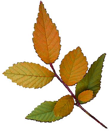 Tubes feuilles