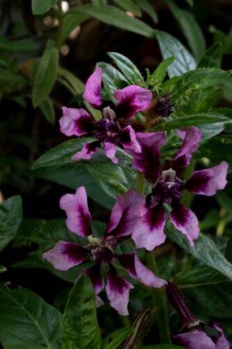 Un jour, une couleur : la vie en mauve et en violet