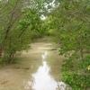 Mangrove - Philippines