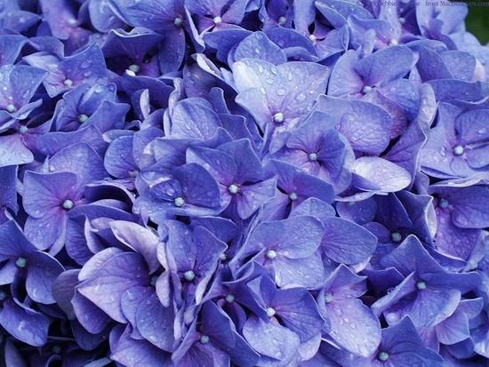 fleurs_055.jpg