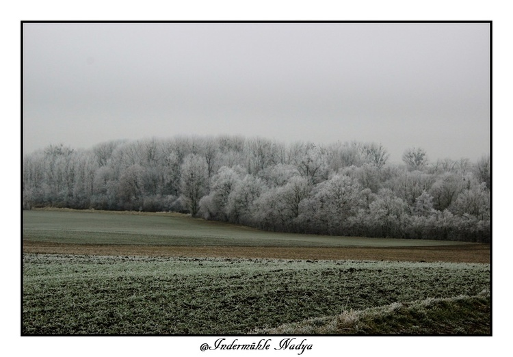 Superbe paysage de givre dans nos Ardennes
