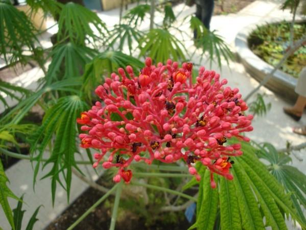 Jardin botanique de Palerme, pg