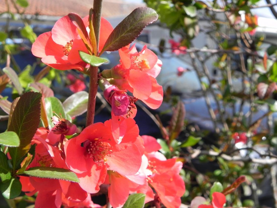 mes fleurs du jardin !