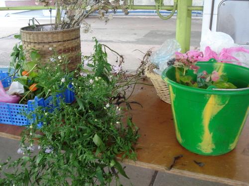 Bourse aux plantes des Jardiniers de l'Yvette