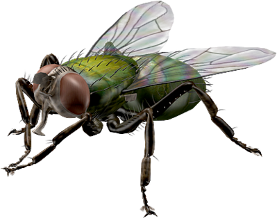 Insecte 1