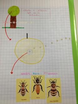 Les 6èmes illustrent l'action de l'Homme sur les abeilles