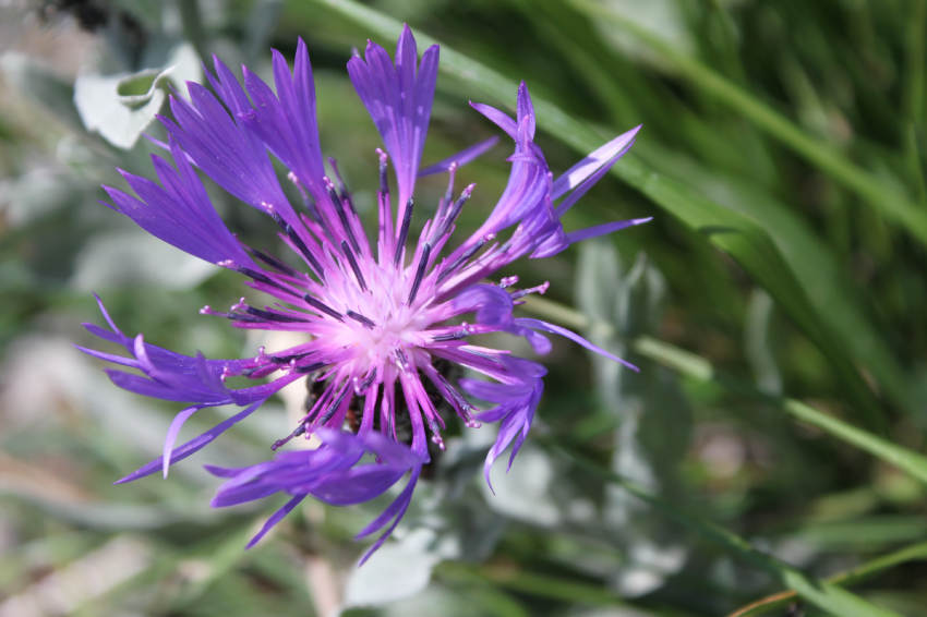 farandole de fleurs de montagne