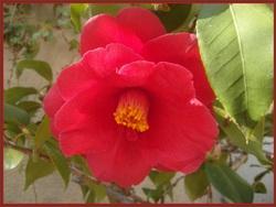Miniatures Florales