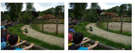 Sortie au zoo pour les maternelles et les CP