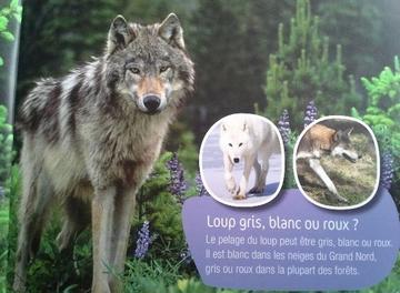 Documentaire sur le loup
