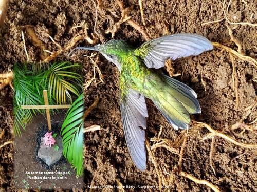 Hommage de Nolhan au petit colibri