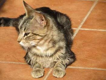 Un chat déjoue une exposion au gaz dans un immeuble