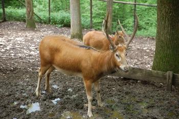 Parc animalier Bouillon 2013 enclos 163