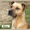 Nina B 3