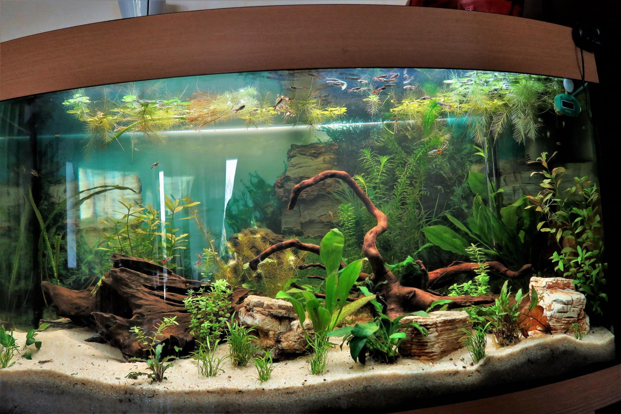 Aquarium ~# 2
