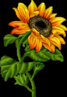 ma fleur préféré