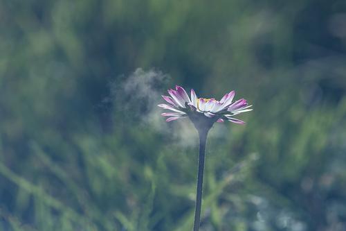 Une petite fleur dans les nuages ...