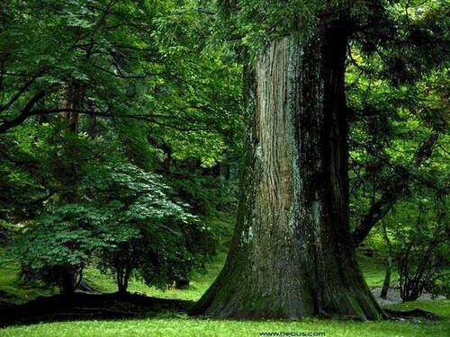 Aux arbres