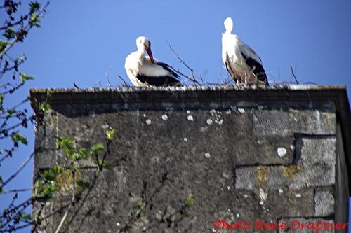 Des cigognes à Châtillon sur Seine !