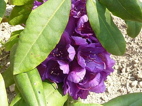 fleurs-avril-2011-006.jpg