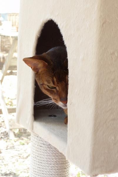 A la découverte de l'arbre à chats :