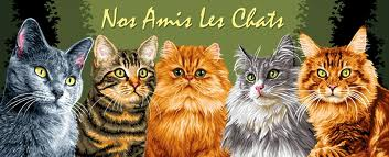 chats roux ....§!