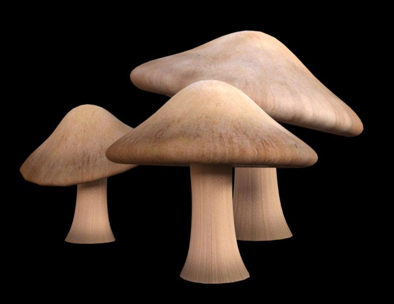 Image de champignons (tube-render-png)