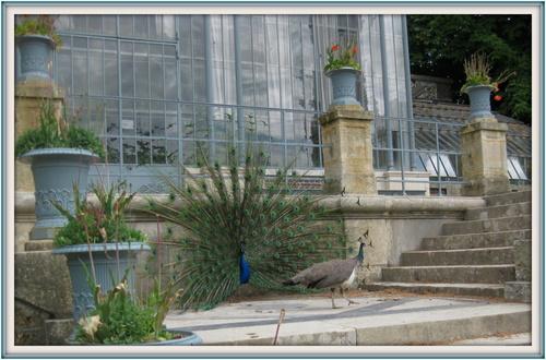 Jardin des Plantes de Rouen ... en avril 2012
