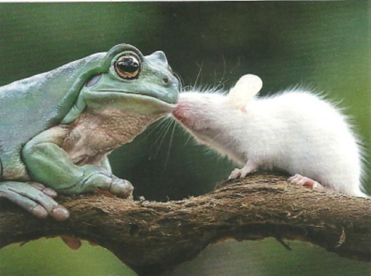 Tenir sa langue...