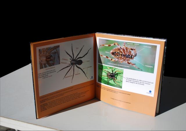 Blog de wadou : Trésors de notre Nature, Mon deuxième album photos, les araignées ou araneides