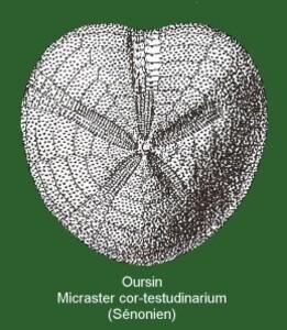 oursin 2