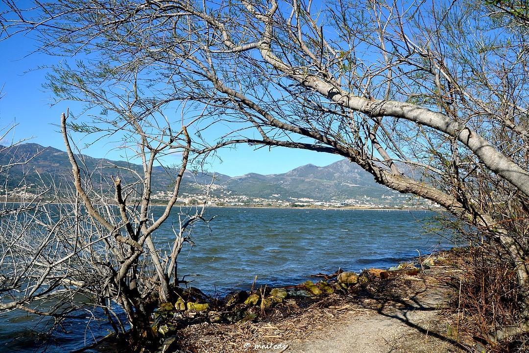 Le long de l'étang de Biguglia - Corse