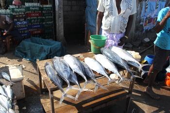 Negombo du 14 au 15 février 2015