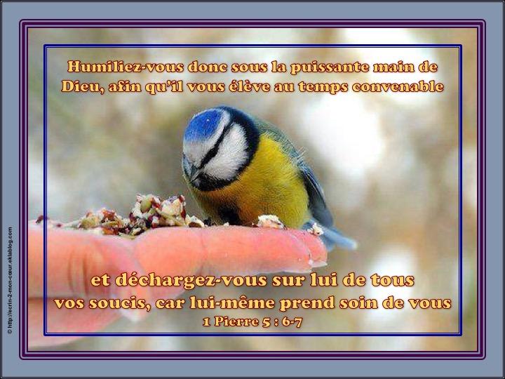 Déchargez-vous sur lui de tous vos soucis - 1 Pierre 5 : 6-7