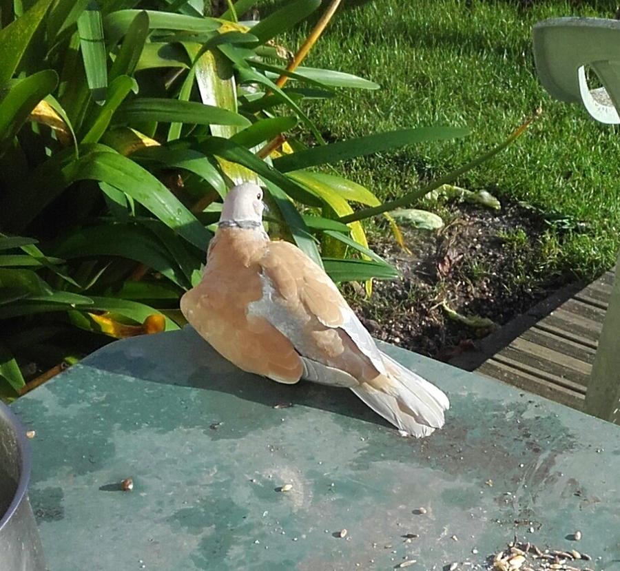 les oiseaux    en jardin