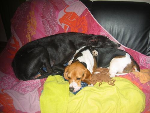Bella et Diego les inséparables