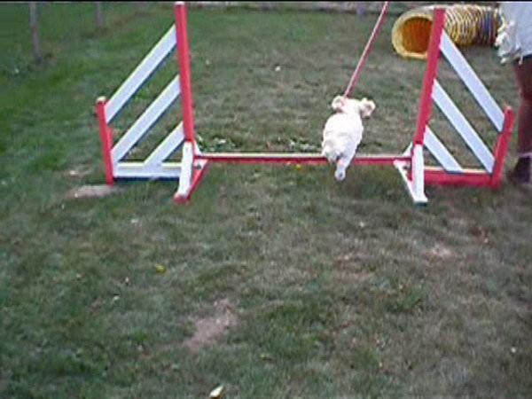 abby agility 1