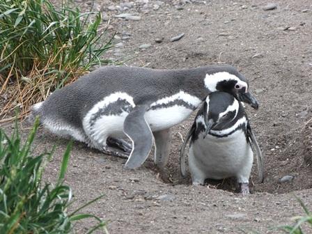 Visite aux pingouins