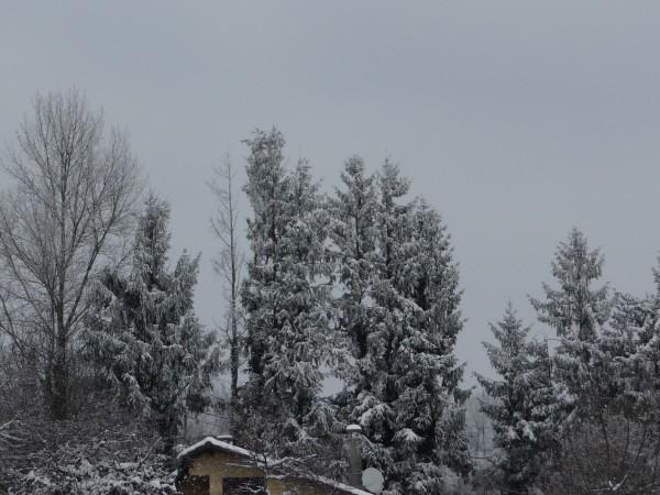 neige janvier 2010 (41)