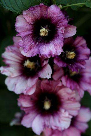 Le jardin comme exutoire (16)