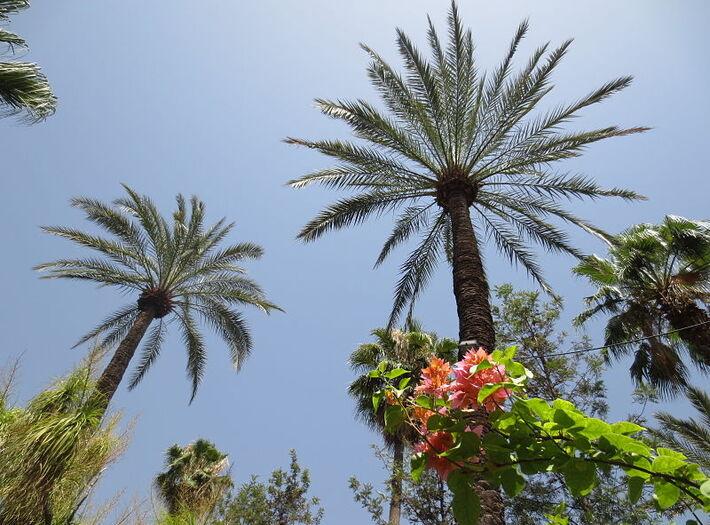 Les Jardins de Majorelle