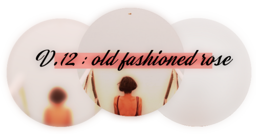 V.12 : old fashioned rose