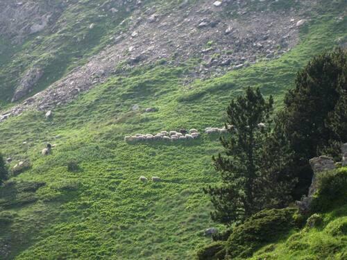 Le nouveau domaine des agneaux