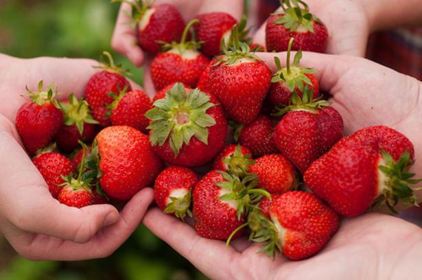 CC  : jronaldlee Découvrez les fruits et légumes de saison en juin, les fromages et les viandes
