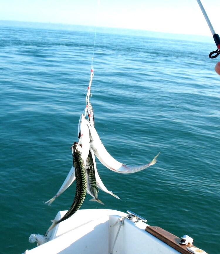 Envie de poisson ?