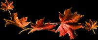 *** Lumière d'automne ***